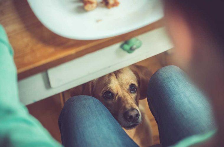 alimentos saudaveis para cachorro