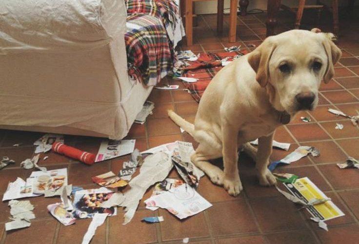 como educar um cachorro