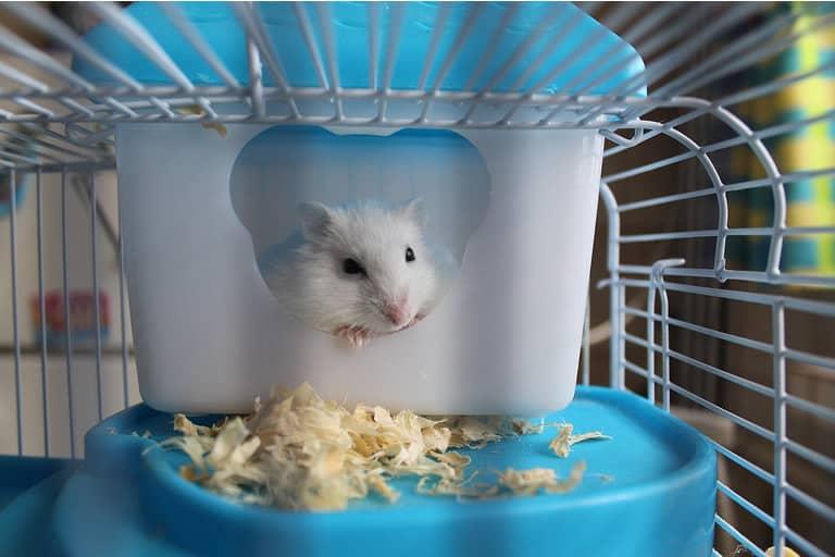 gaiola para hamster sirio