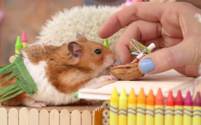 vale a pena levar hamster em férias