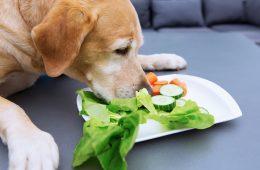 alimentação saudável para cachorros