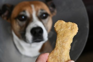 como fazer petiscos naturais para cães