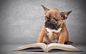 melhores livros para adestramento de cães