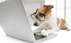 melhor pet shop online