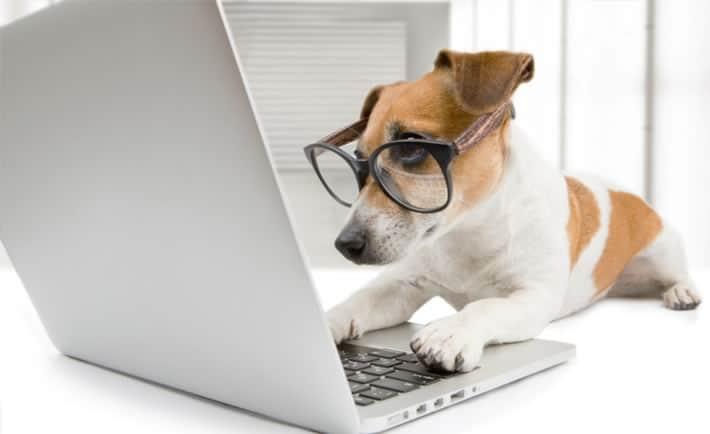 melhor pet shop online barato
