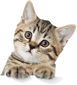 onde comprar ração para gatos barata