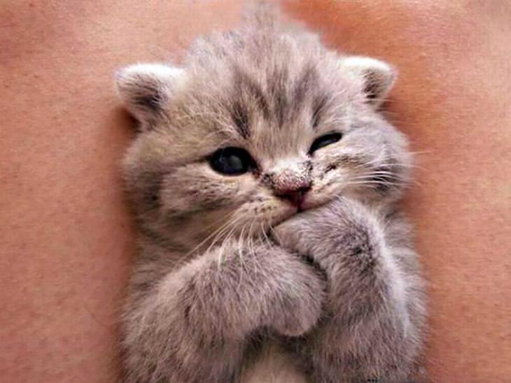 melhor ração umida para gatos