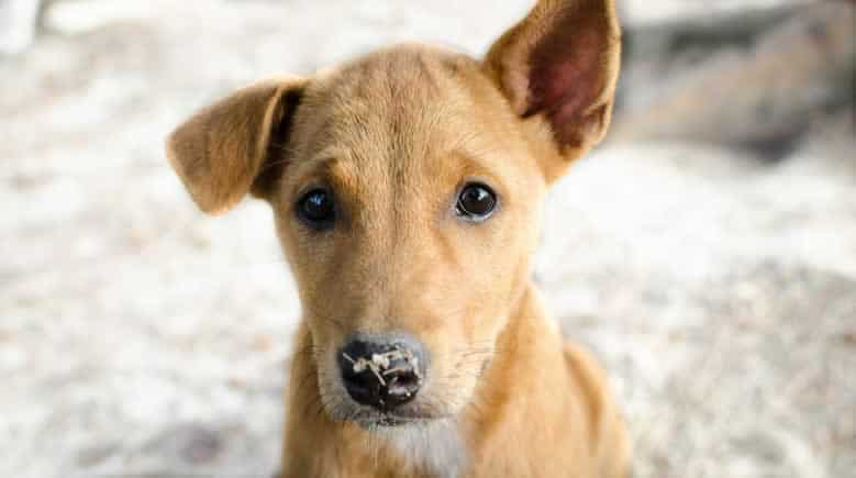 nomes para cadelas