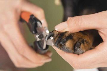 melhores cortadores de unha para cães