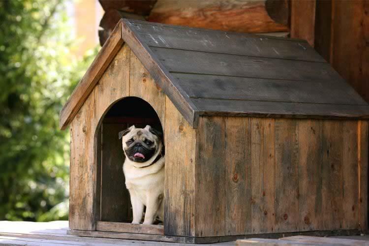 melhor casinha de cachorro