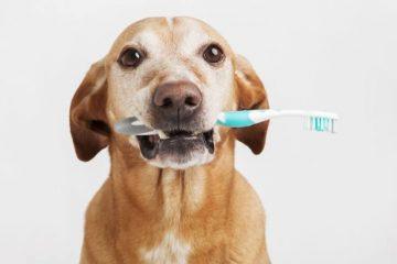 melhor pasta de dente para cachorro