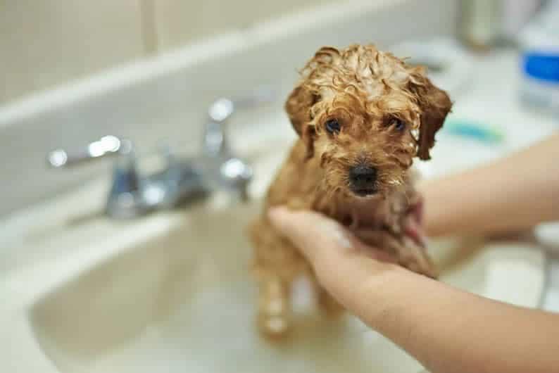 melhor shampoo para cachorro
