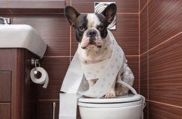 melhor tapete higiênico para cachorro