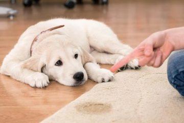 melhor eliminador de odores para cães