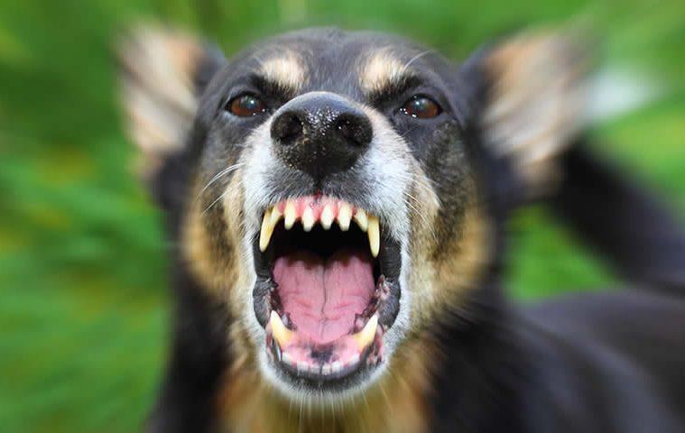 sintomas causados quando cachorro morde alguém
