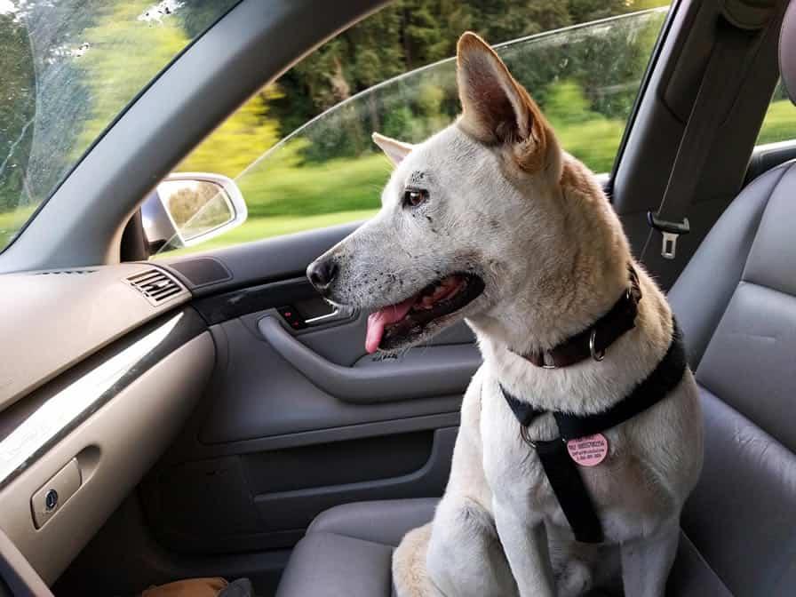 Tem Na Web - Pensando em Levar o seu Cachorro em uma Viagem Mas Não Sabe Como?