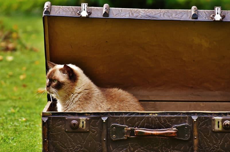 viagem com gatos