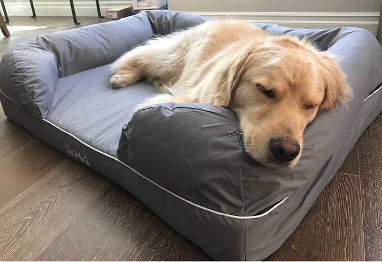 Resultado de imagem para cachorros dormindo no travesseiro da cama