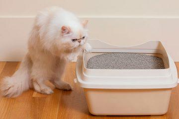 melhor caixa de areia para gatos