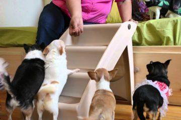 melhor escada para cachorro