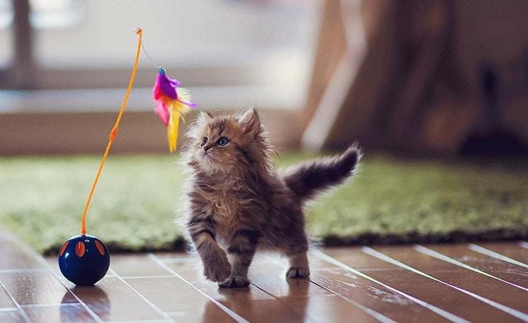 melhores brinquedos para gatos