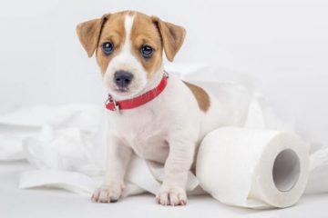 melhor adestrador sanitário para cães