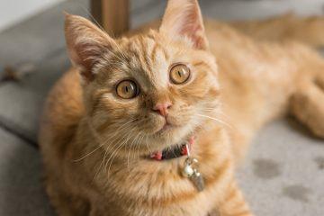 ração special cat
