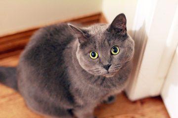 ração special cat prime