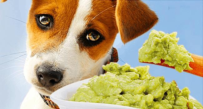 curso alimentação natural para cães online