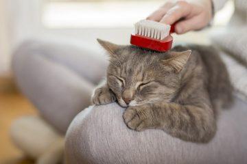 melhores escovas para gatos