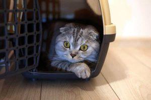 melhor caixa de transporte para gatos