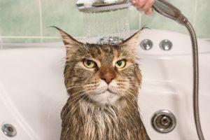 melhor shampoo para gato