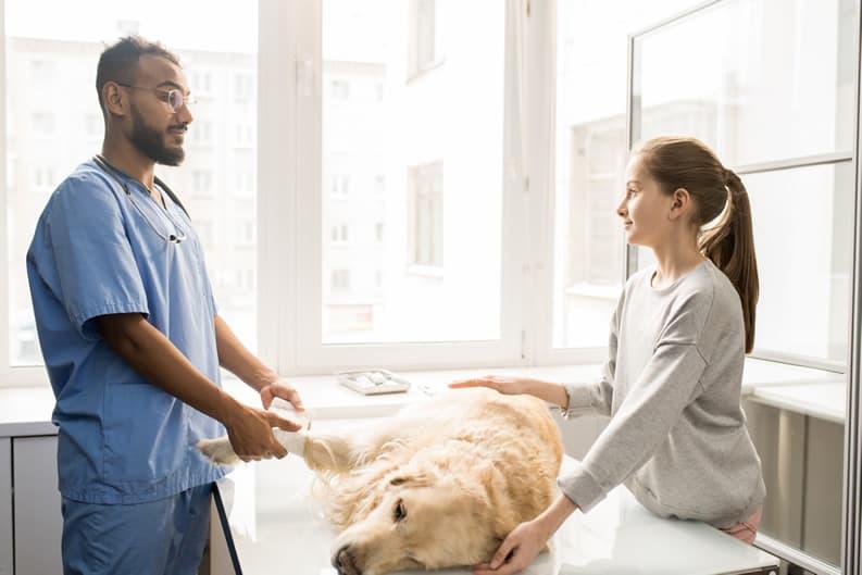 dermatofitose em cães
