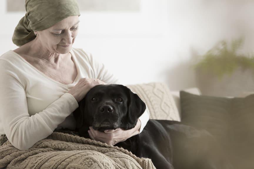 cão com dermatite atópica