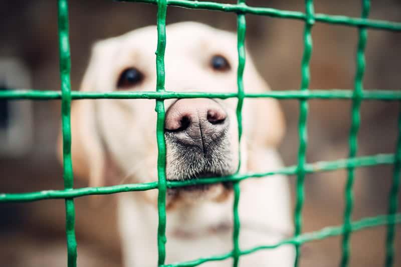 cão sofrendo com doença da cinomose