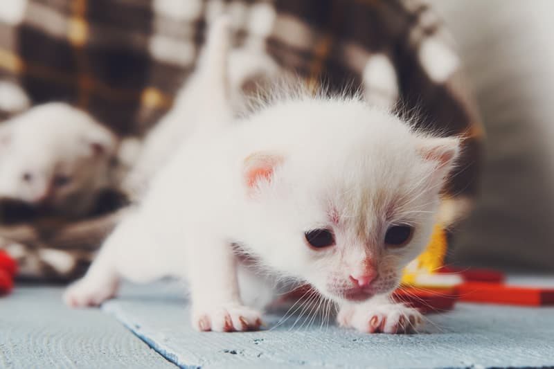 673 Nomes Para Gatos Escolha O Nome Perfeito Amor Aos Pets